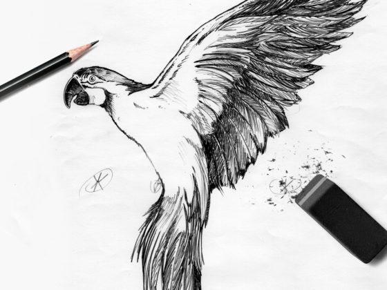 Perroquet Alice Tumler